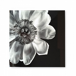 Картина Kelly Hoppen Black & White Flower 1206406
